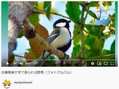 【Youtube】HyoKyoChannelに「兵庫教育大学で見られる野鳥」動画をアップロードしました